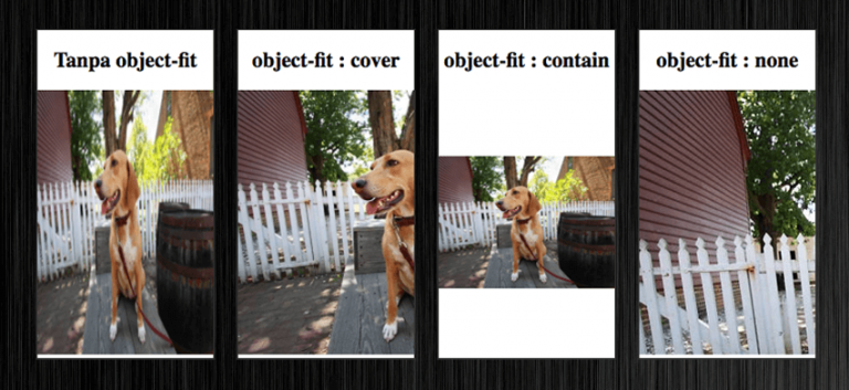 """Fungsi """"object-fit:cover"""" pada CSS"""